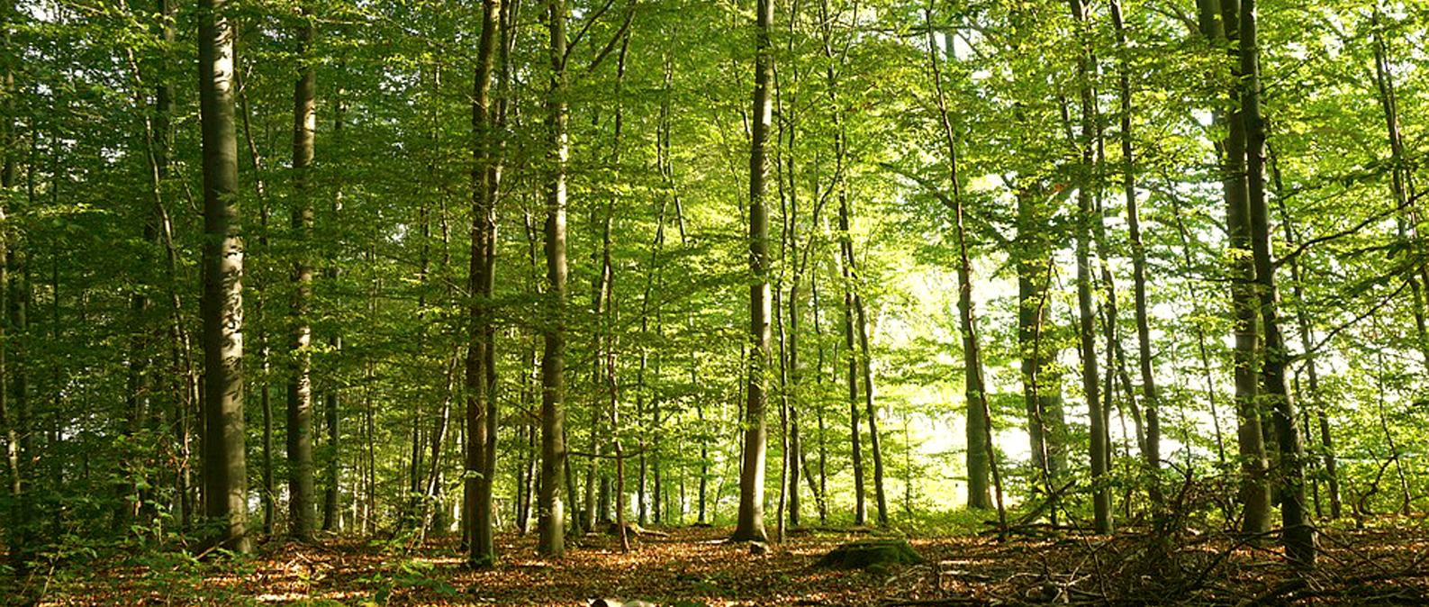Le bois, un matériau naturel et écologique.